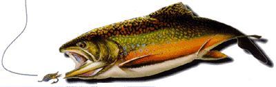 dyneema-fish.jpg.jpg